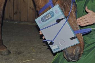 Cabestro para la toma de radiografías de equinos