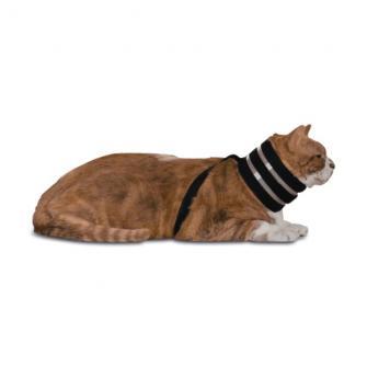 Collares para perros y gatos BiteNot