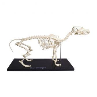 Maqueta de plástico del esqueleto de perros